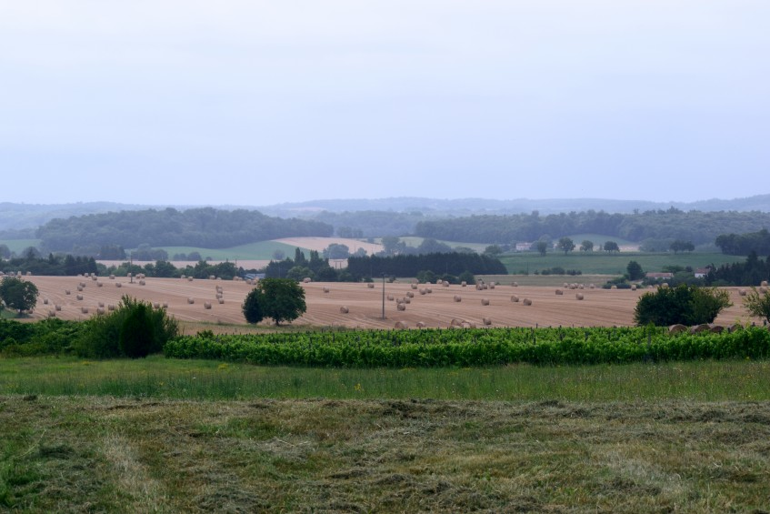 The location of the factory is part of the Fins Bois Cognac-producing region